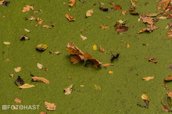 FOT©HAST Herfst op het water