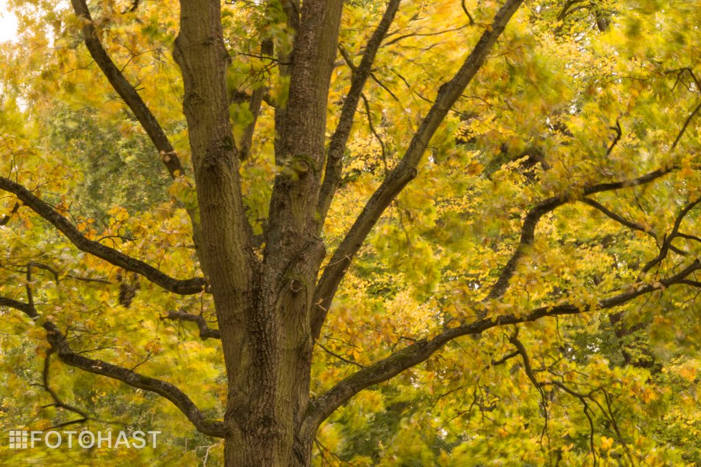 FOT©HAST De sterke boom