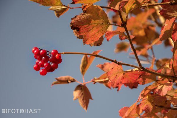FOT©HAST Prachtige herfstkleuren