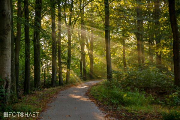 Bos van Beetsterzwaag