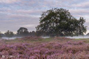 Heide Bakkeveen, in de vroege ochtend